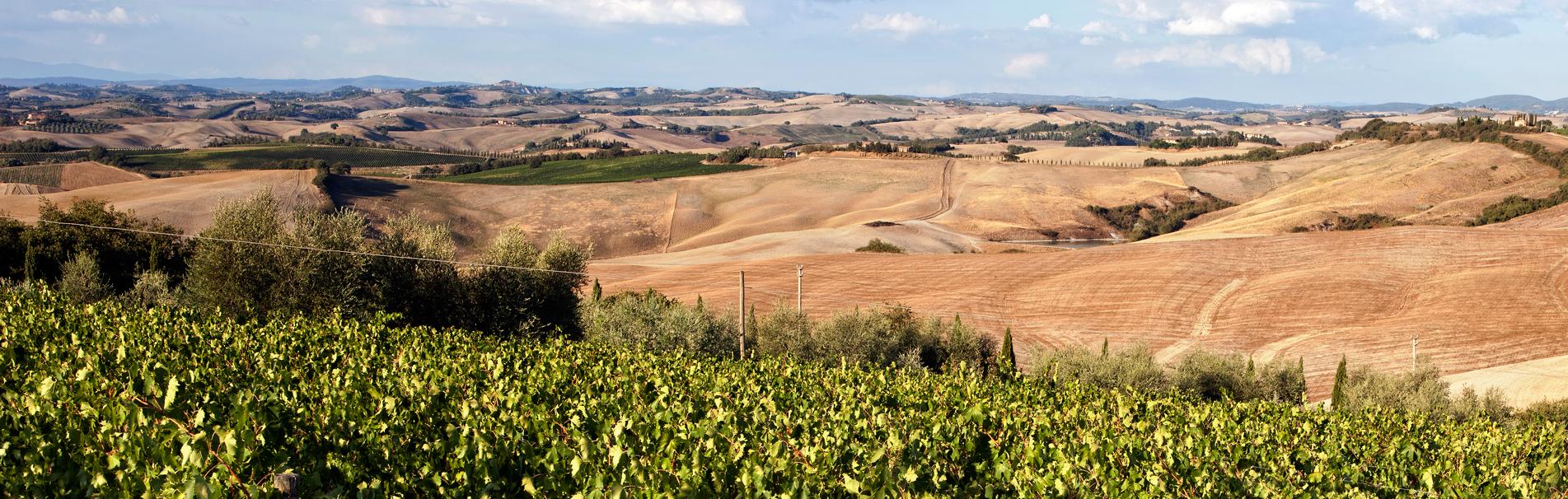 Baricci Azienda Vinicola, Produttori di Brunello di Montalcino e Rosso di Montalcino da tre generazioni immersa nello splendido scenario della Collina Colombaio Montosoli, Provincia di Siena.